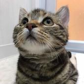 愛猫の口内ケアに関するアンケート【Vol.14】