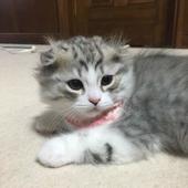愛猫はあなたにとって、どのような存在ですか?【Vol.15】