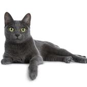 猫:アプリサービス向上のためのアンケート