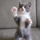 「猫齢ピッタリな情報が届く機能」に関するアンケート