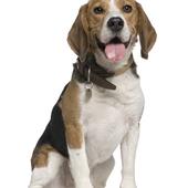 愛犬との生活に関するアンケート【Vol.24】