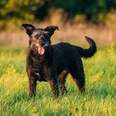 「犬 首輪 おしゃれ」に関するアンケート