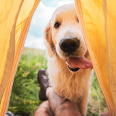 愛犬との生活に関するアンケート【Vol.25】