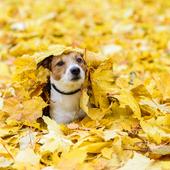 愛犬との生活に関するアンケート【Vol.26】