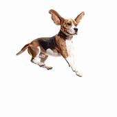 愛犬との生活に関するアンケート【Vol.27】