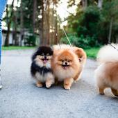 愛犬との生活に関するアンケート【Vol.28】