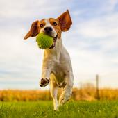 愛犬との生活に関するアンケート【Vol.29】