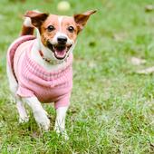 愛犬との生活に関するアンケート【Vol.30】