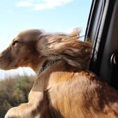 愛犬との生活に関するアンケート【Vol.31】