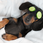 愛犬との生活に関するアンケート【Vol.32】