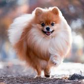愛犬との生活に関するアンケート【Vol.33】