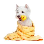 愛犬との生活に関するアンケート【Vol.34】