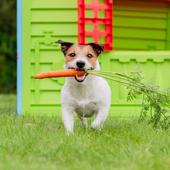 愛犬との生活に関するアンケート【Vol.36】