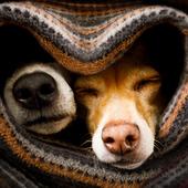 愛犬との生活に関するアンケート【Vol.38】