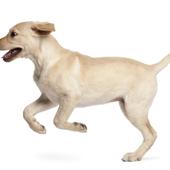 愛犬との生活に関するアンケート【Vol.42】
