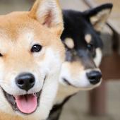 愛犬との生活に関するアンケート【Vol.44】