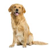 愛犬との生活に関するアンケート【Vol.45】