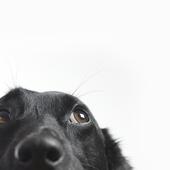 愛犬との生活に関するアンケート【Vol.46】
