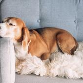 「犬の介護」に関するアンケート