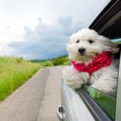 愛犬との生活に関するアンケート【Vol.47】