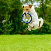 愛犬との生活に関するアンケート【Vol.49】