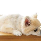 愛犬との生活に関するアンケート【Vol.50】