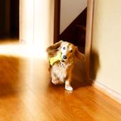愛犬との生活に関するアンケート【Vol.55】