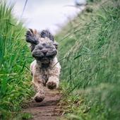 愛犬との生活に関するアンケート【Vol.56】