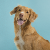 愛犬との生活に関するアンケート【Vol.57】