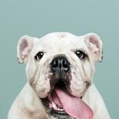 愛犬との生活に関するアンケート【Vol.58】