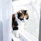 愛猫との生活に関するアンケート【Vol.17】