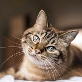 愛猫との生活に関するアンケート【Vol.18】
