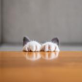 愛猫との生活に関するアンケート【Vol.19】