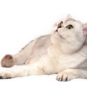愛猫との生活に関するアンケート【Vol.21】
