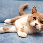 愛猫との生活に関するアンケート【Vol.20】