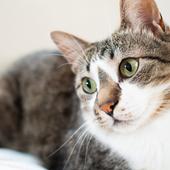 愛猫との生活に関するアンケート【Vol.22】