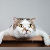 愛猫との生活に関するアンケート【Vol.23】