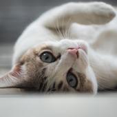 愛猫との生活に関するアンケート【Vol.24】