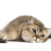 愛猫との生活に関するアンケート【Vol.25】