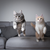 愛猫との生活に関するアンケート【Vol.26】