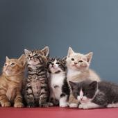 愛猫との生活に関するアンケート【Vol.27】