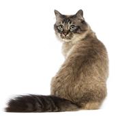愛猫との生活に関するアンケート【Vol.28】