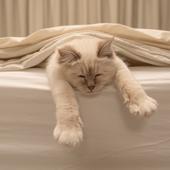 愛猫との生活に関するアンケート【Vol.30】