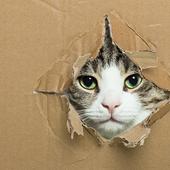 愛猫との生活に関するアンケート【Vol.31】