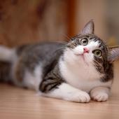 愛猫との生活に関するアンケート【Vol.33】