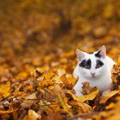 愛猫との生活に関するアンケート【Vol.34】