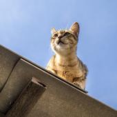 愛猫との生活に関するアンケート【Vol.35】