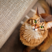 愛猫との生活に関するアンケート【Vol.36】