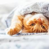 愛猫との生活に関するアンケート【Vol.37】