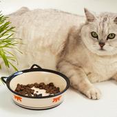 愛猫との生活に関するアンケート【Vol.38】